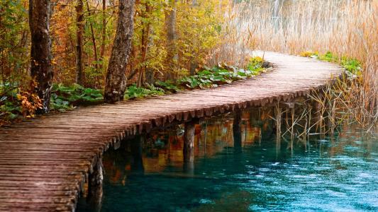 桥,湖,芦苇,森林