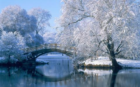 冬天,河,三角洲,雪,树,山