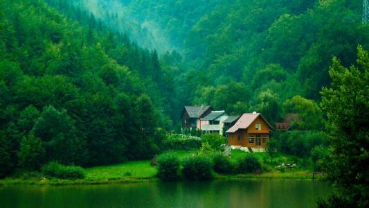 森林,树木,灌木,绿化,房屋,河流