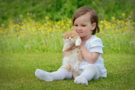 女孩,猫,孩子,小猫,草