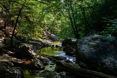 克里米亚,石头,流,性质,树木
