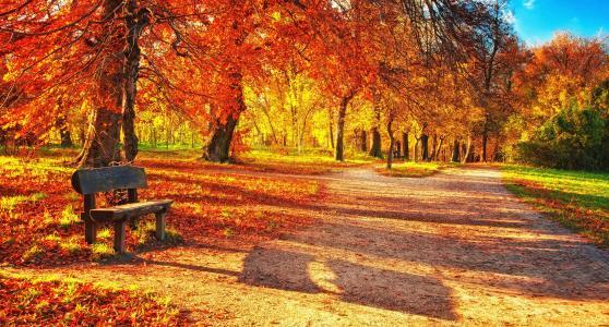 秋天,公园,美丽