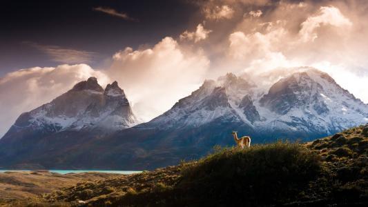 动物,骆驼,山