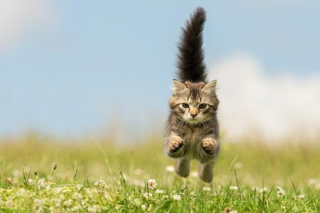 猫,性质,飞行