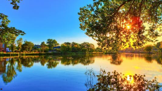 树,森林,水,光,太阳,天空,表面,海滩,射线,品牌