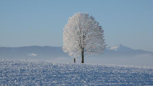 唯美冬日雪景
