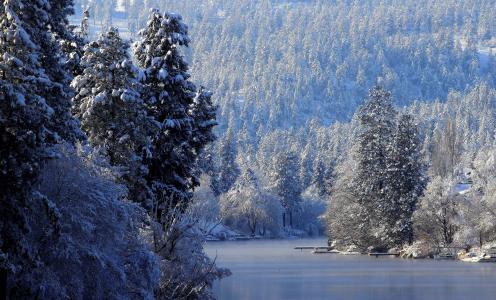 冬天,树木,雪,河