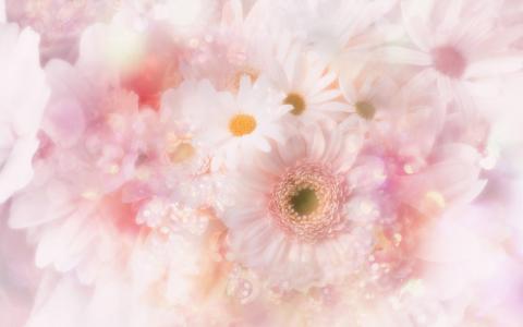 洋甘菊,温柔,鲜花,亮度
