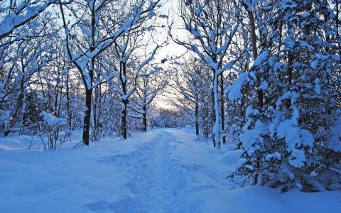 雪,大自然,森林