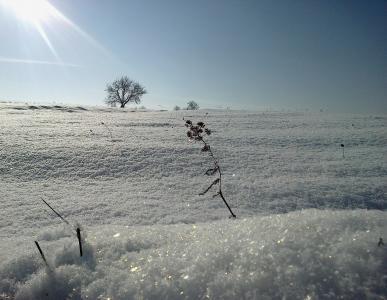 日出,场,树,雪