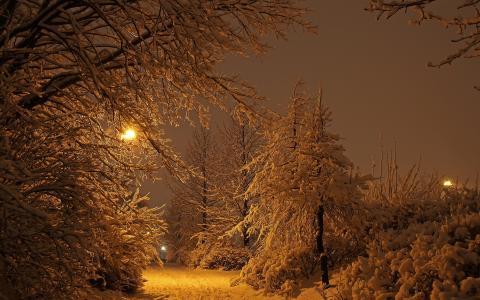 冬天,雪,树,灯塔,晚上