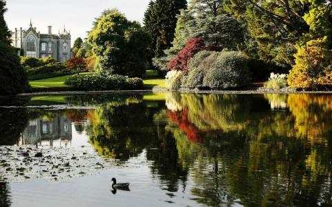大厦,公园,池塘,鸭子
