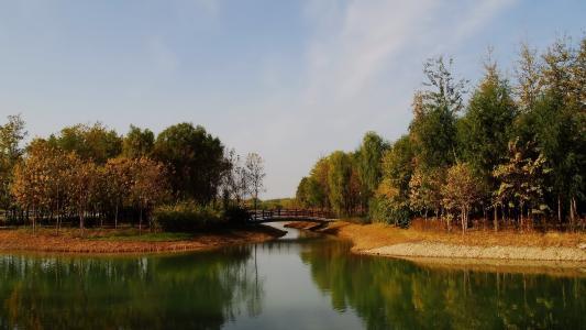 公园,池塘,树木,桥,秋天