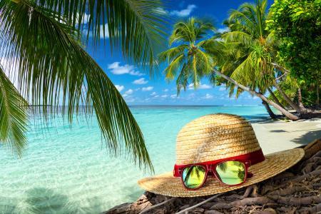 帽子,眼镜,热带,棕榈树,海洋,夏天