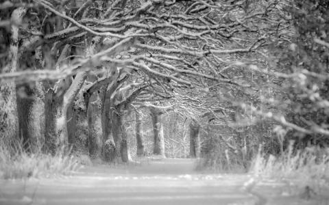 雪,冬天,树木