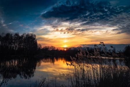 芦苇,湖,森林,日落