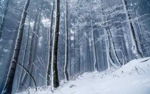 自然,森林,山,雪,白霜,美丽
