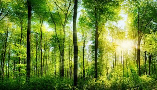 森林夏天,光线,树干,性质