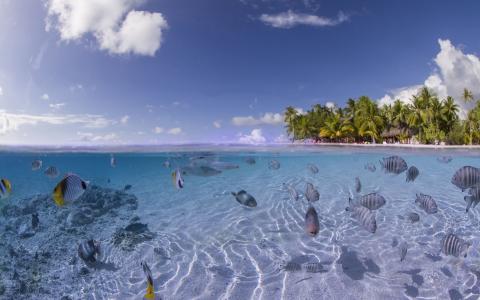 海洋,沙滩,海,水,鱼,棕榈,天空