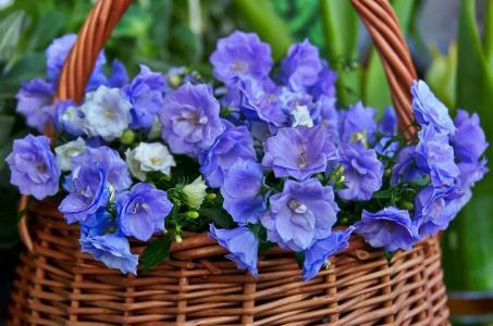 夏天,篮子,鲜花,钟声