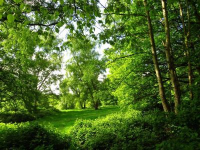 公园,夏天,伦敦,树木,性质