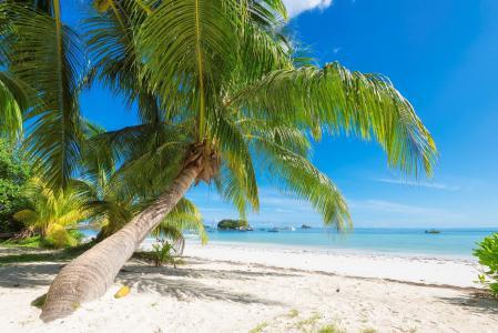 热带,度假村,棕榈树,海洋