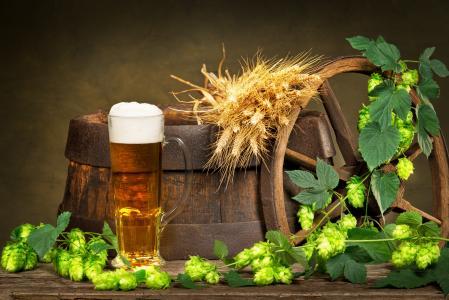 桶,车轮,耳朵,啤酒花,啤酒,泡沫