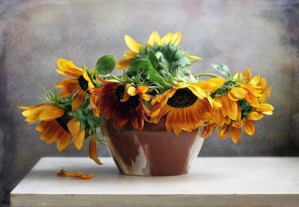 鲜花,花束,仍然,生活,花,性质,向日葵