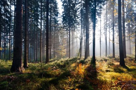 秋天,森林,光,自然,树木,光线