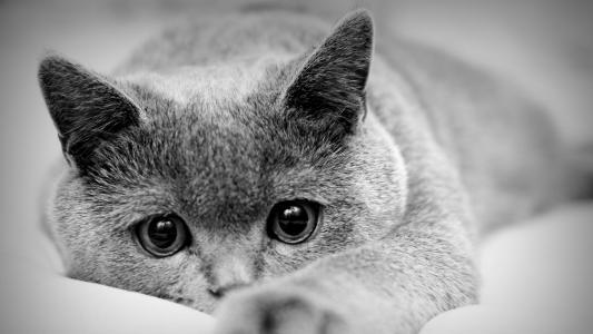猫,眼睛,看