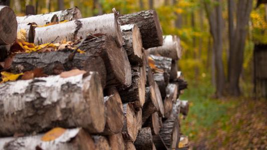 秋天,性质,柴火,村庄,景观