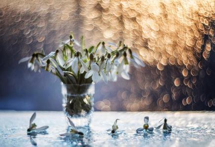 静物,散景,鲜花,雪花莲,泼水,由Sinkalsky塔拉斯