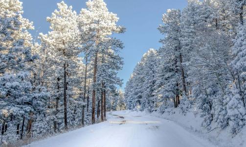 路,冬天,雪,美丽