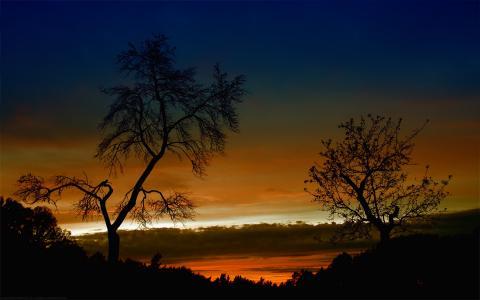 性质,晚上,天空,日落,树,秋,云,光,太阳,美丽