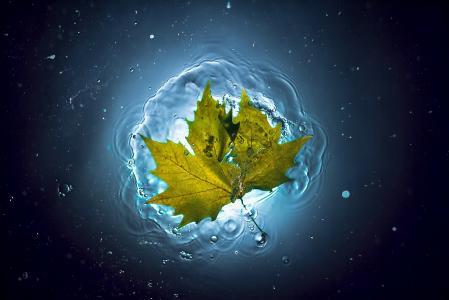 叶,水,夏天