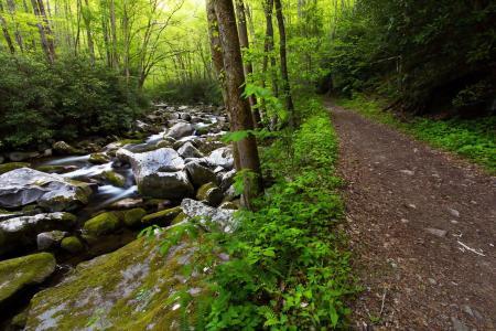 密林,森林,公路,树木,小溪,石头,溪流,美景