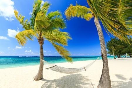 照片,度假村,棕榈树,休息,吊床