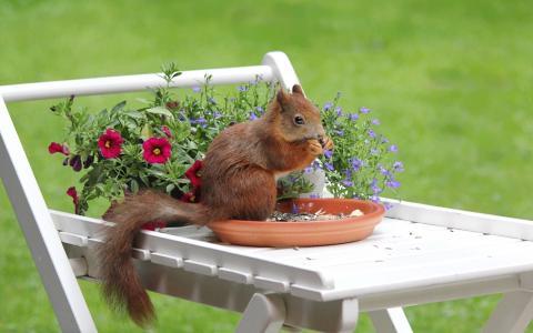 松鼠,鲜花,表,飞碟,坚果,散景,夏天结束