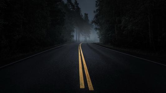 早上,路,雾