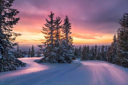 冬天,雪,冷杉,摄影师,Jorn Allan Pedersen,山,下降