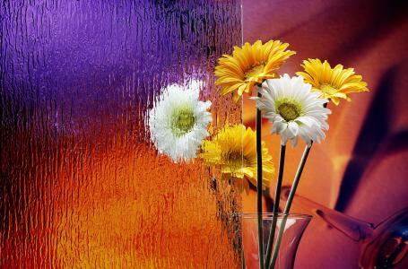 花束,洋甘菊,玻璃,花瓶