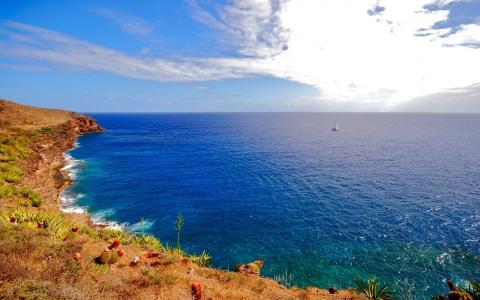 蓝色的大海,岸边,绿叶