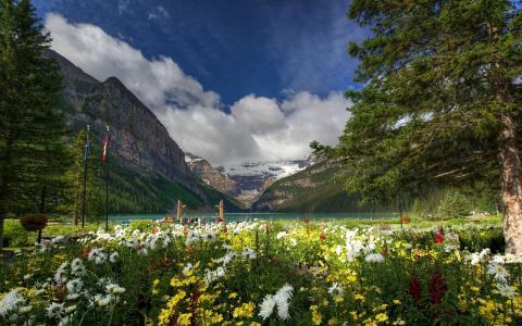路易斯湖,班夫国家公园,加拿大,加拿大,高山,湖泊,花卉,树木,自然