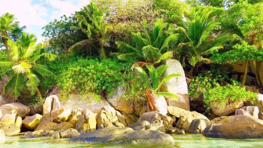 热带地区,棕榈树,岩石,海,海岸