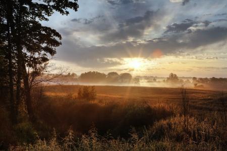 太阳,早晨,场,光,草