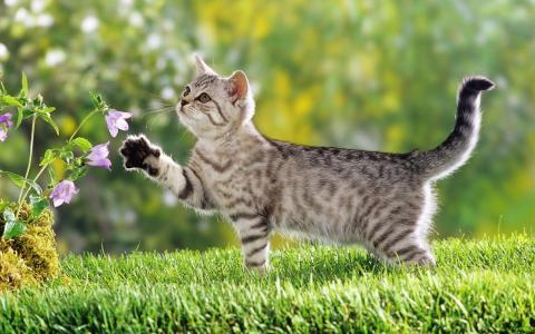 猫,条纹,草,花,脚