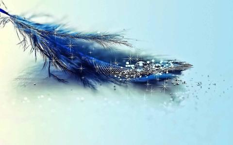 羽毛,蓝色背景,蓝色