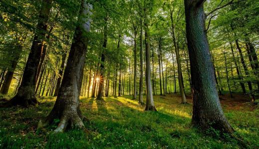 性质,森林,光线,太阳