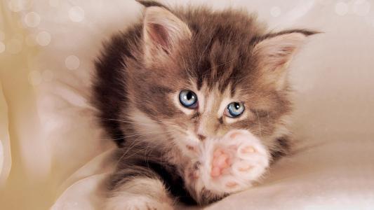 脚,婴儿,猫,模糊,小猫