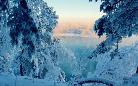森林,梦想,美丽